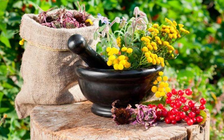 Лекарственные растения для детей