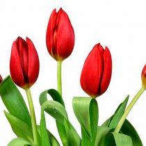 Праздник весны сценарий для старшеклассников