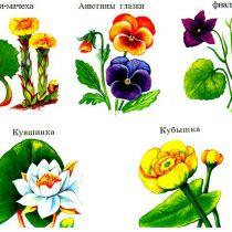 Викторина про растения для младших школьников