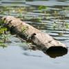 Почему дерево не тонет в воде