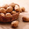 Почему картофель называют вторым хлебом