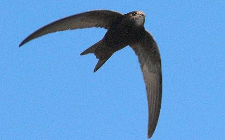 Какая птица летает быстрее всех