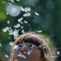 Что нужно знать об аллергии на тополиный пух у детей