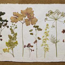 Лето, пора делать гербарий