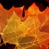 Способы скелетирования листьев
