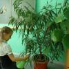 Комнатные цветы в школе, какие выбрать