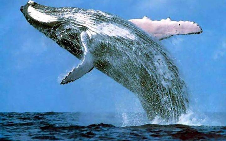 Самое большое животное на Земле