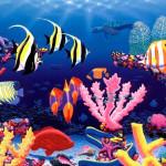 denym o podvodnom mire
