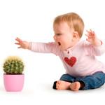 komnatnie rasteniy dly detei