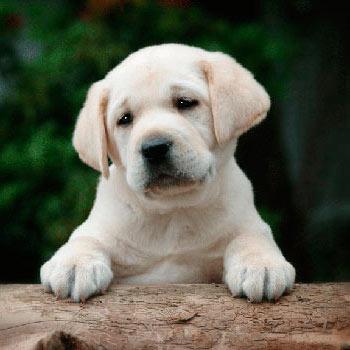 фото породы с дружелюбных собак
