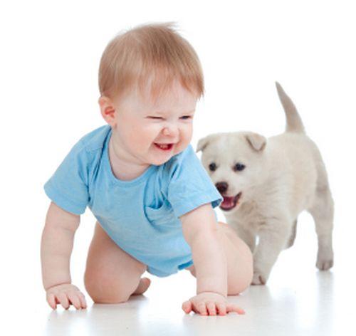 Аллергия у детей на кошек и собак