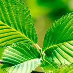 как доказать что растение дышит
