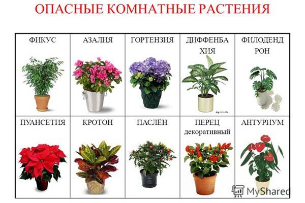 комнатные цветы в школе